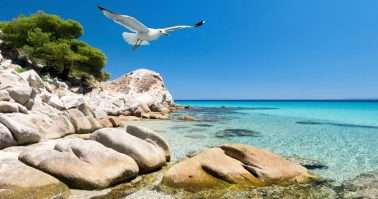 Seagulls over shallow water by the shore in Sithonia, Northern Greece